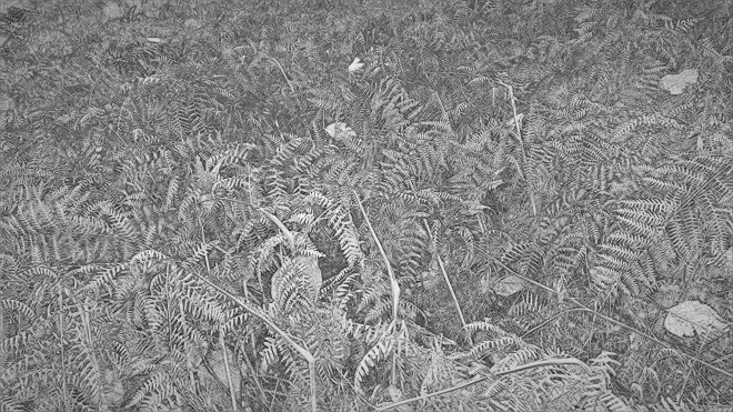 2017_12_02_Silver Engraved Ferns